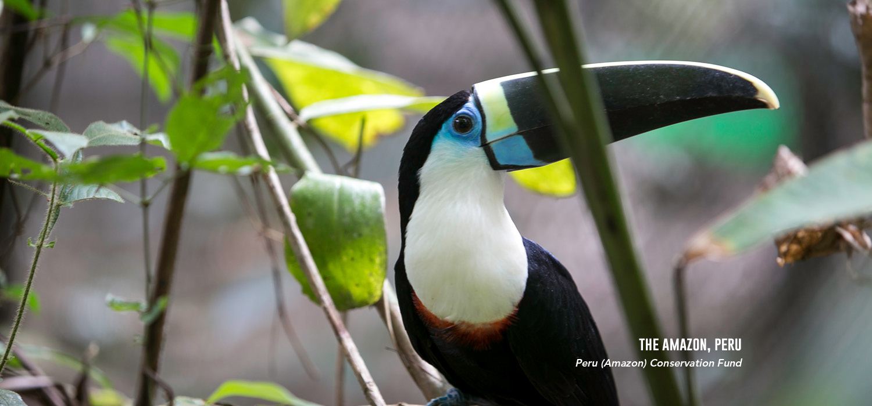 Peru Amazon Fund